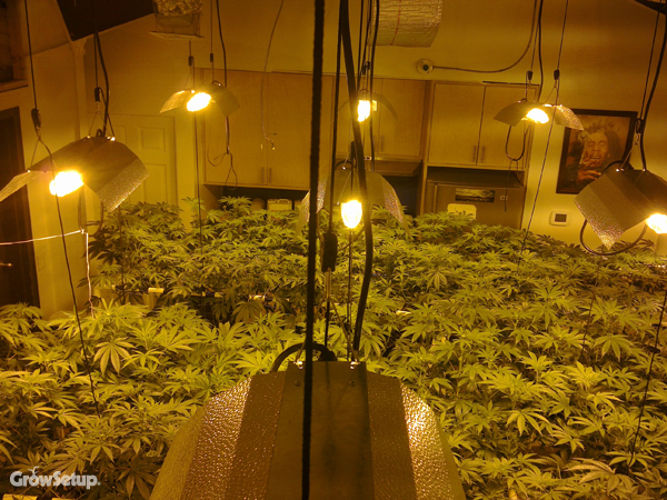 ... Grow Room Setup. » Part 68