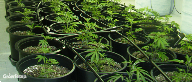 Grow Setup   Experts In Grow Room Setup, Hydroponic Systems, Growing  Marijuana, Discount Hydroponics